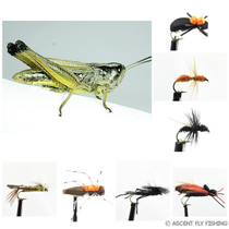 Terrestrial Insect Selection