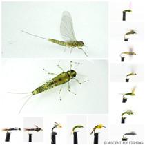 Blue Winged Olive Mayfly Selection