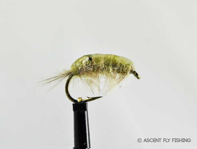 Bts scud ascent fly fishing for Ascent fly fishing