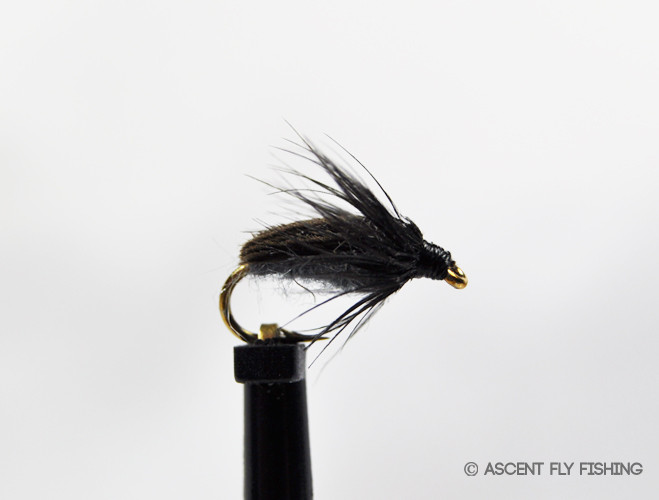 Colorado caddis ascent fly fishing for Ascent fly fishing