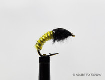 Yellow Jelly Cord Caddis Larva