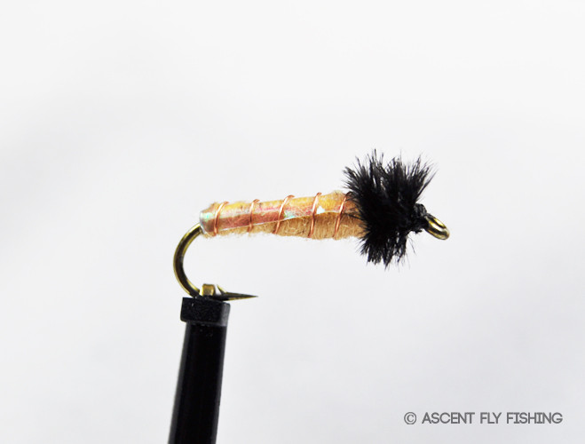 Better buckskin ascent fly fishing for Ascent fly fishing