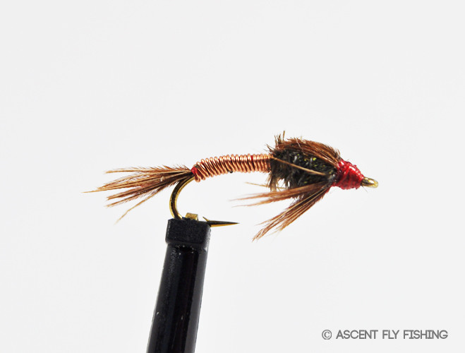 Pheasant tail brassie ascent fly fishing for Ascent fly fishing