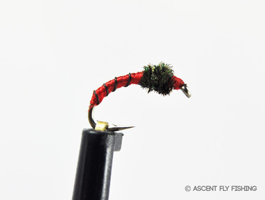 Zebra midge pupa ascent fly fishing for Ascent fly fishing