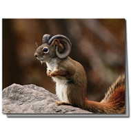 Ram Squirrel Cards Boxed Set of 8