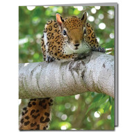 Jaguar Squirrel Cards Boxed Set of 8