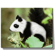 Panda Squirrel Cards | Boxed Set of 8 | Undiscovered Squirrels