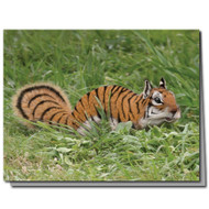 Tiger Squirrel Cards Boxed Set of 8
