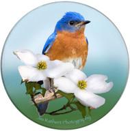 Eastern Bluebird Sandstone Ceramic Coaster | Front