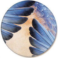 Bluebird Feather Sandstone Ceramic Coaster | Front