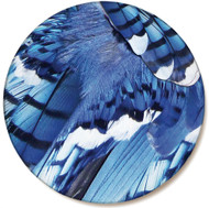 Blue Jay Feather Sandstone Ceramic Coaster | Front