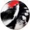 Woodpecker Feather Sandstone Ceramic Coaster   Front