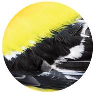Goldfinch Feather Sandstone Coaster