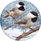 Chickadee Sandstone Ceramic Coaster | Image shows front and cork back
