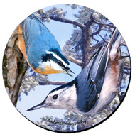 Nuthatch Coaster | Flexible Polyester | Photo Quality Image | Moisture Proof