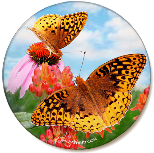 Fritillary Butterfly Sandstone Ceramic Coaster | Butterfly Coaster | Front