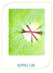 Paper Crafts KPPR1120