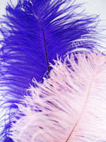 ostrich-feathers-long.jpg