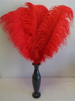 ostrich-feathers-red.jpg