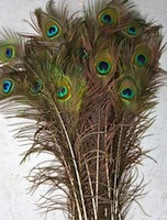 peacock-feathers-25-title.jpg