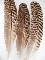 wing-quills-turkey.jpg