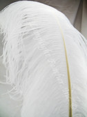 OSTRICH WING PLUMES, PREMIUM, dyed WHITE, per each