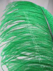 Green Ostrich Feather Plume Premium Large 24-30 inch per each