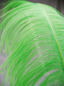 OSTRICH WING PLUMES, PREMIUM, LIME, per each