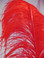 OSTRICH WING PLUMES, PREMIUM, RED, per each