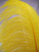 OSTRICH WING PLUMES, PREMIUM, YELLOW, per each