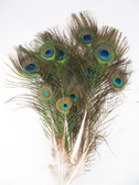 peacock feathers small mini per dozen