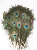 peacock feathers small mini, per 100