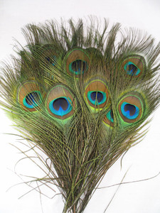 Peacock Feathers SHORT STALK, per dozen