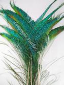 Peacock swords natural