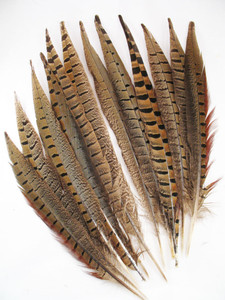 Pheasant Tail Feathers, RING-NECKED, 10-15 inch, per dozen