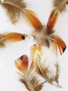 CRAFT Feathers, ring-necked Pheasant,  gold side, strung, per one 1ft