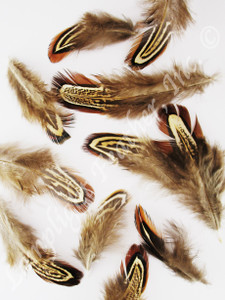 CRAFT Feathers, ring-necked Pheasant, almonds, loose, per .25 oz.