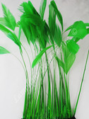 STRIPPED COQUE Feathers, GREEN