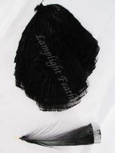 TIPPET CAPE, GOLDEN Pheasant, dyed Black, per EACH