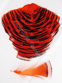 TIPPET CAPE, GOLDEN Pheasant, dyed ORANGE, per EACH