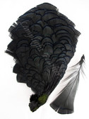 TIPPET CAPE, LADY AMHERST Pheasant, dyed Black