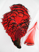 TIPPET CAPE, LADY AMHERST Pheasant, dyed RED, per EACH