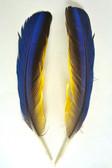 WING QUILL Feathers, macaw, small - per pair