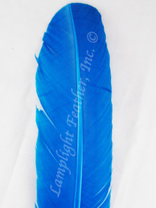 WING QUILL FEATHERS, turkey rounds, dyed TURQUOISE, per DOZEN
