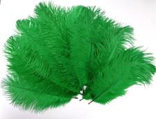 Green Ostrich Feathers 8-12 inch size per Dozen