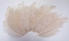Ivory Ostrich Feathers 8-12 inch size per Dozen
