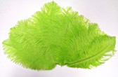lime Ostrich Feathers 8-12 inch size per Dozen