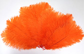 OSTRICH Feathers, SHORT, ORANGE, per DOZEN