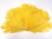 OSTRICH Feathers, SHORT, YELLOW, per DOZEN