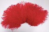 Red Ostrich Feathers 8-12 inch size per Dozen